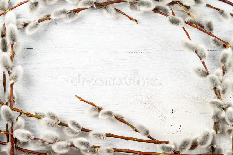 Willow catkins frame on white textured wooden background.  stock photos