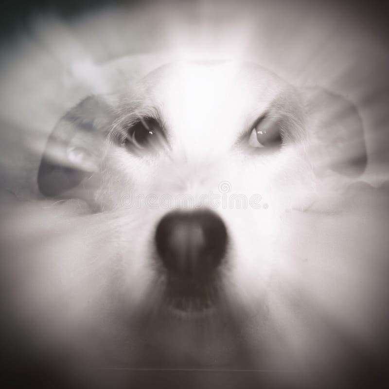 Zen Dog Portrait royalty free stock image