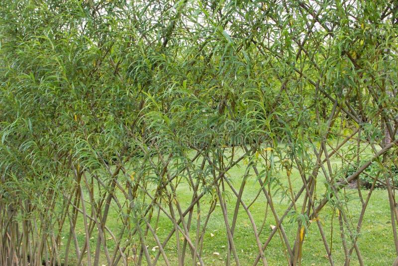 Willow fence in the garden stock photos