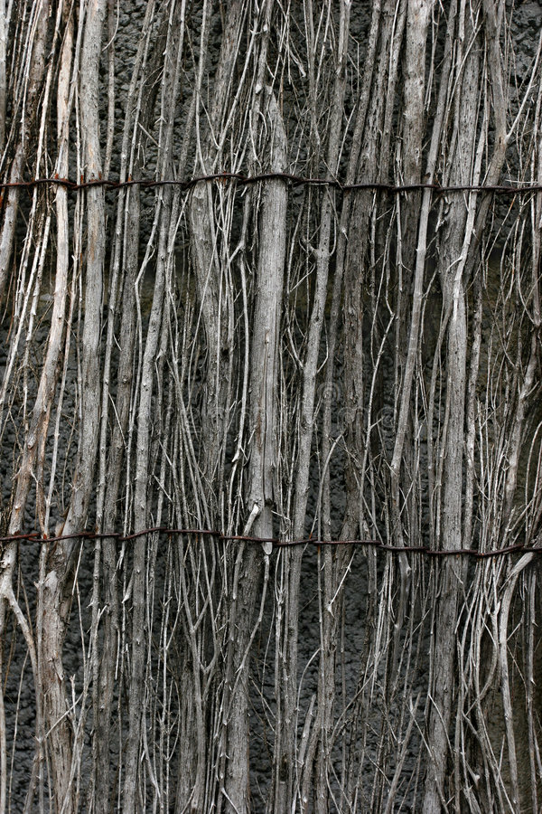 Willow Fencing royalty free stock photos