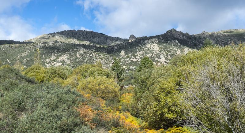 Willow forest in the Callejas stream stock photography