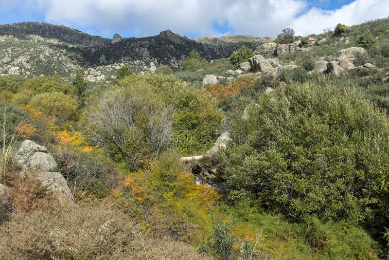 Willow forest in the Callejas stream stock image