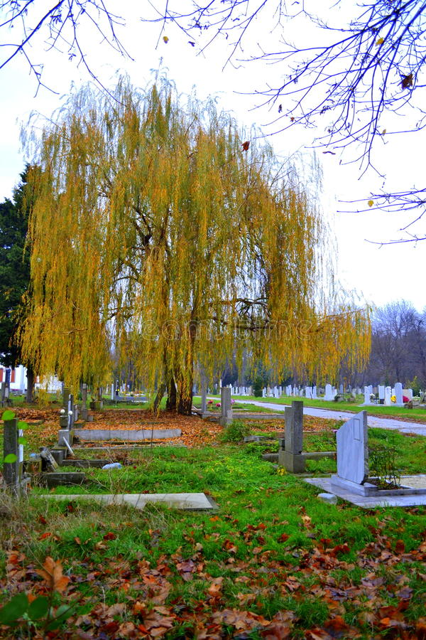 Free Willow In Graveyard Stock Photography - 47406592