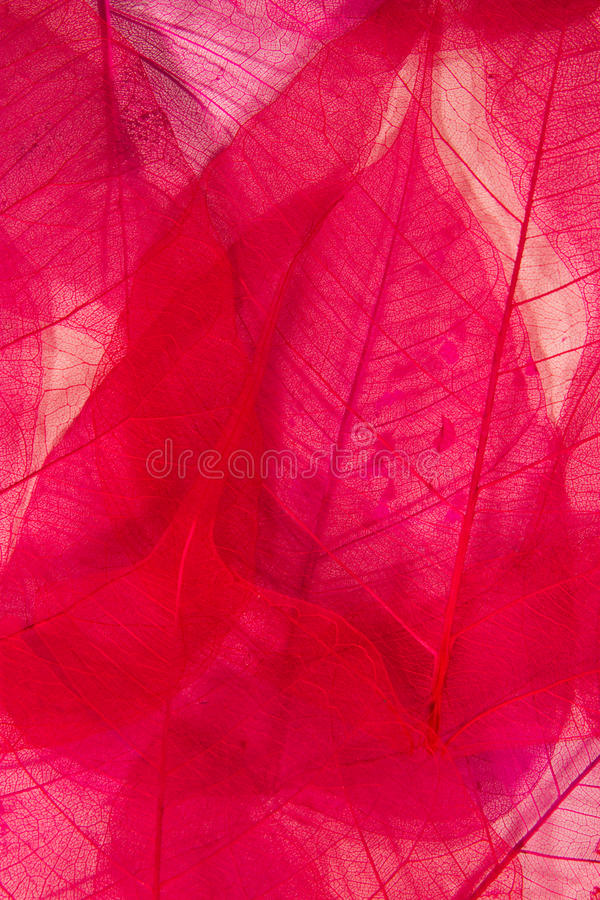 Free Willow Leaves Royalty Free Stock Photos - 15300298