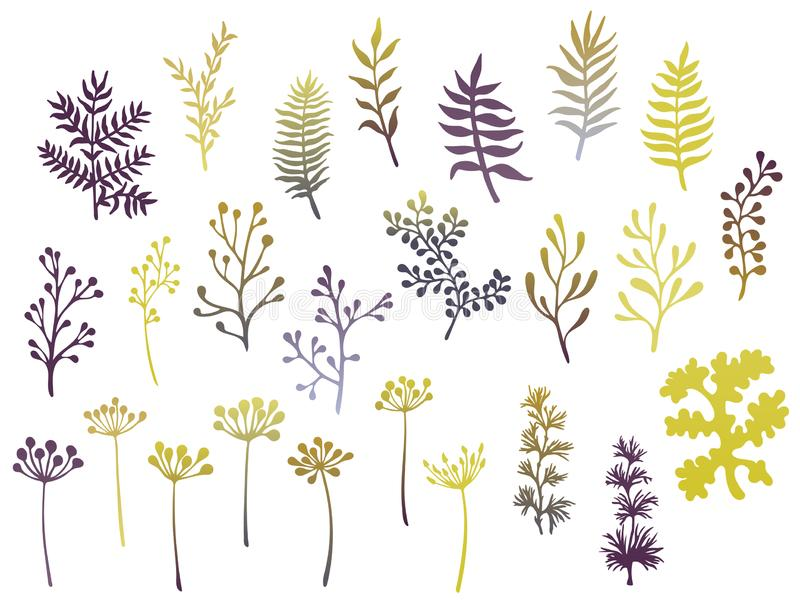Willow and palm tree branches, fern twigs, lichen moss, mistletoe, savory grass herbs, dandelion flower vector illustrations set. Gold grey branches, twigs stock illustration