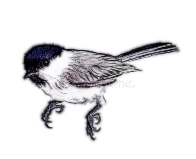 Willow tit, animal painting. Willow tit on white background. Drawings of real animals in different techniques. Computer and hand animal painting, animalistic stock illustration