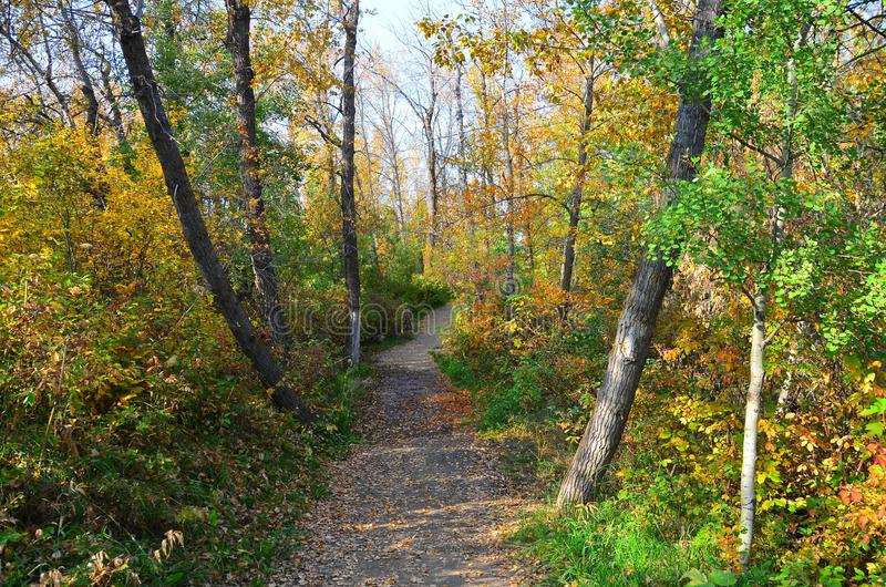 Willow Trail System rouge, St Albert, Canada occidental photos libres de droits