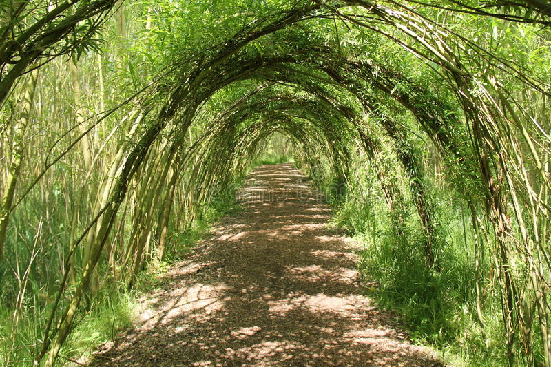 Willow Tree Arches. A Pathway Through a Tunnel of Willow Tree Arches royalty free stock image