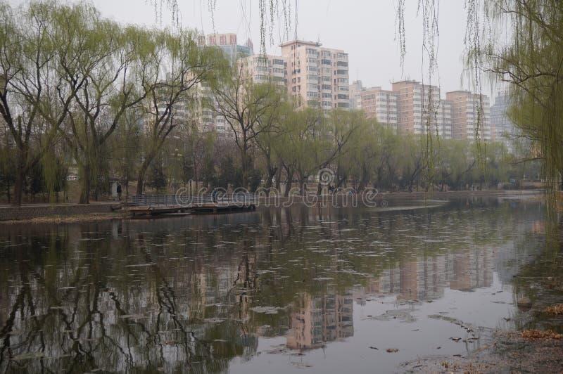 Willow Tree in de vroege lente in Peking stock afbeeldingen