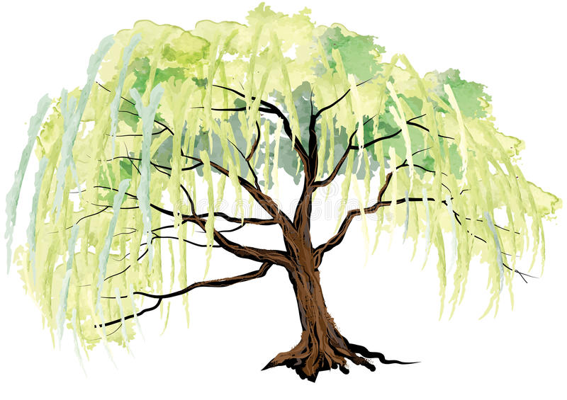 Willow tree on the ground landscape design,watercolor look created with brush stock illustration