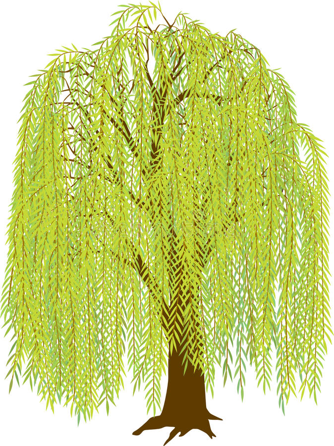 Willow Tree. Illustration of a weeping willow tree. EPS file has leaves arranged in many layers can be removed or isolated, to individualize the look of the tree