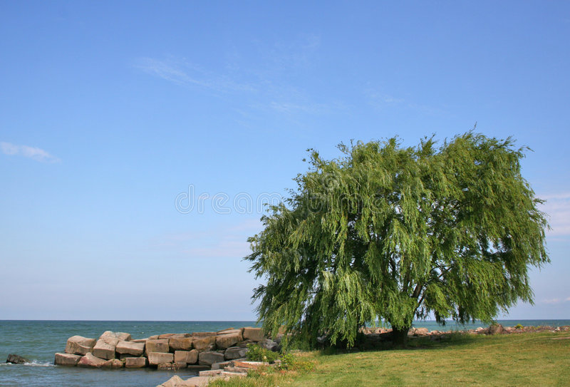 Willow Tree Lake stock image