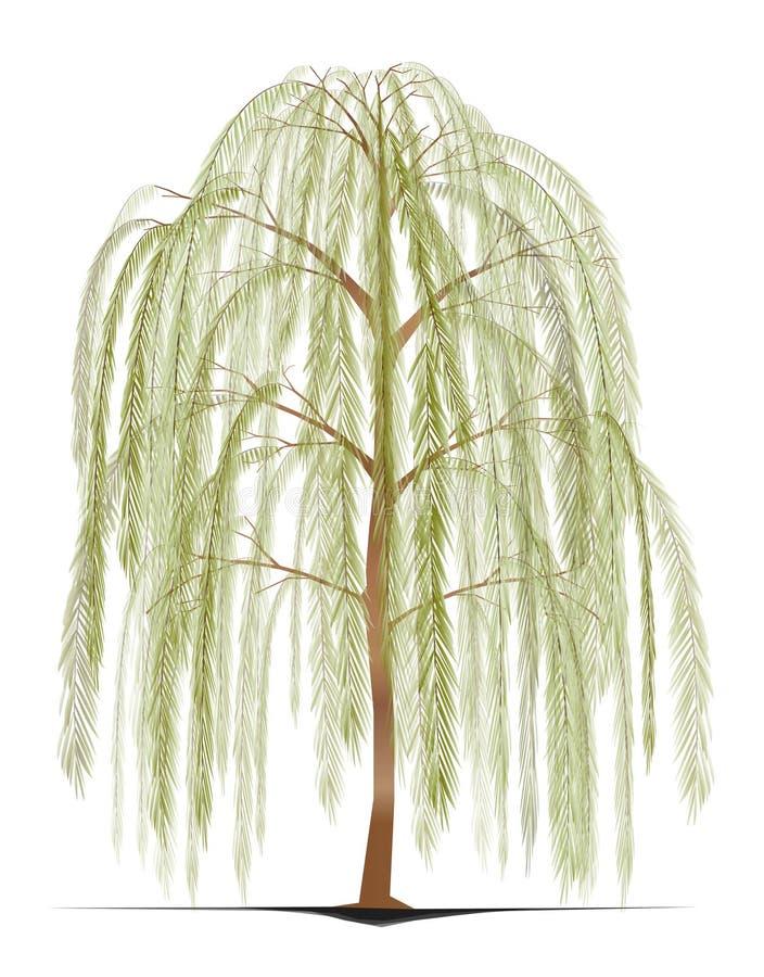 Willow Tree piangente illustrazione vettoriale