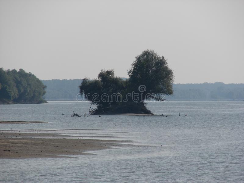 Willow tree on sand island river Danube stock photo