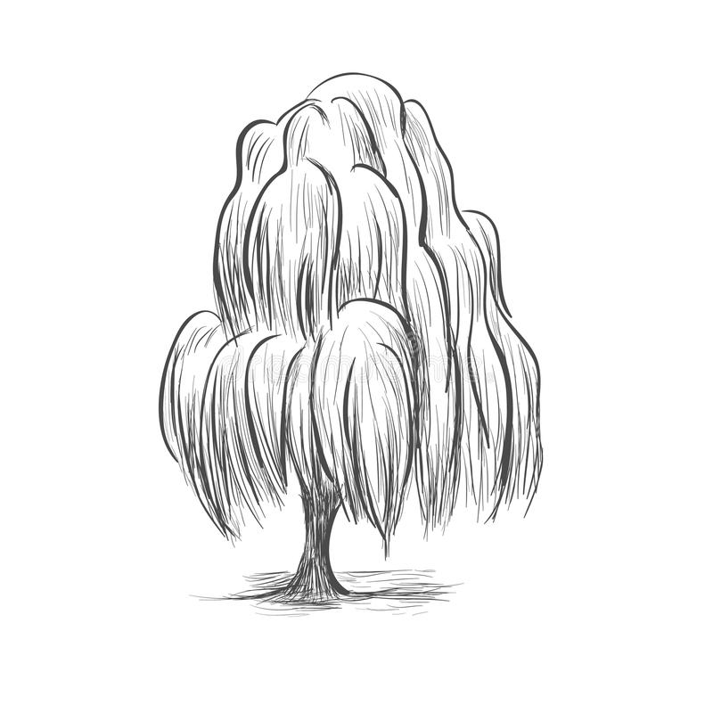 Willow tree sketch drawing vector illustration of a silhouette o stock illustration