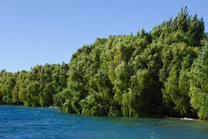 Willow Trees Along Lake in Chile. Willow trees along Lago General Carrera lake at Chile Chico in Chilean Patagonia. Lago General Carrera is Chile`s biggest lake stock image