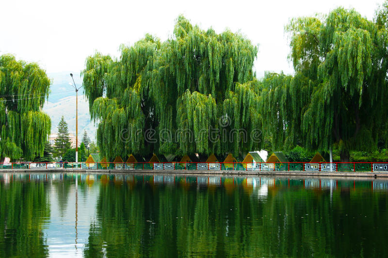 Download Willow trees at the lake stock image. Image of city, beautiful - 26519247