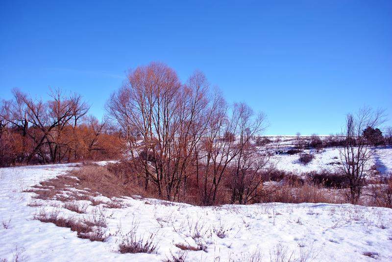 Willow trees without leaves on the hill covered with snow, winter landscape with trees lines on horizon background, sky. Willow trees without leaves on the hill stock photography