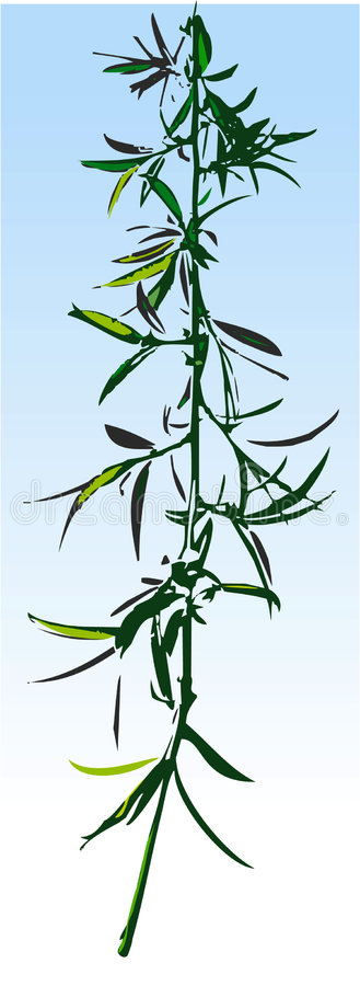 Willow twig, Vector Illustration royalty free illustration