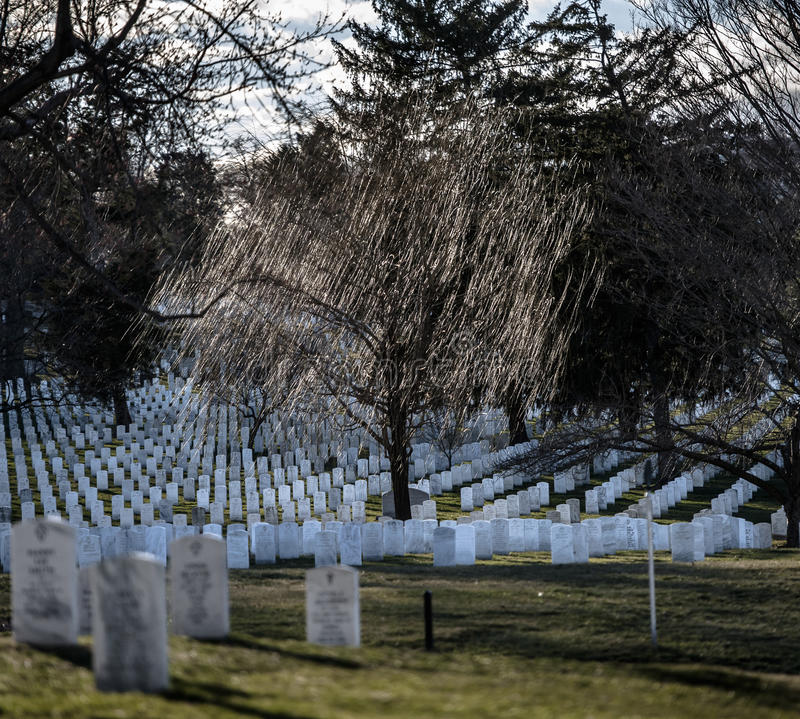 Willow Weep For Them. Arlington National Cemetery, late winter, and the headstones of many of the Nation`s veterans who served and, too often, gave their lives royalty free stock photos