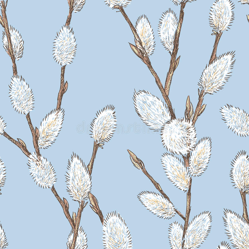 Willows branches with the fluffy buds stock illustration