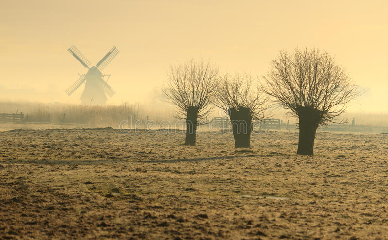 Willows in Holland royalty free stock photos