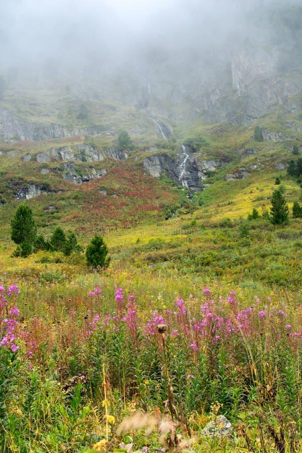 Willowweedgebied en waterval in de Altai-bergen, Rusland royalty-vrije stock fotografie