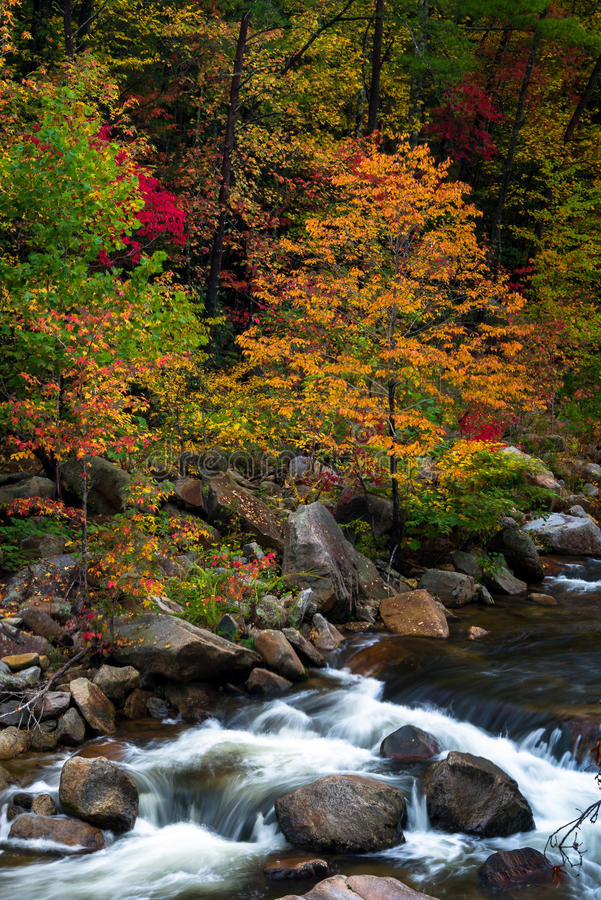 Wilson Creek Autumn 10 fotografia de stock royalty free