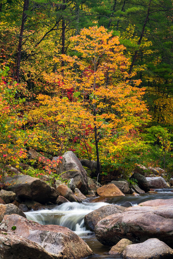 Wilson Creek Autumn 11 fotografia de stock royalty free