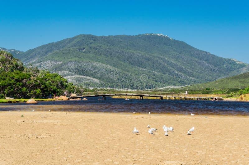 Wilsons海角国家公园的南部的感潮河在Gippsland,澳大利亚 免版税库存照片
