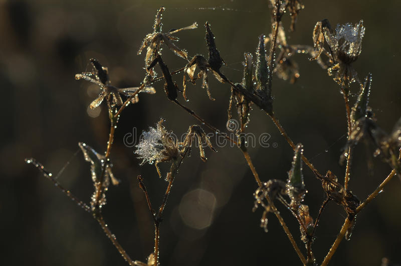 Wilted flower in the morning - autumn nature detail stock photography