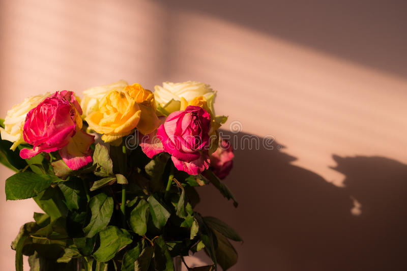 Wilted flowers. Bunch of wilted flowers, deadhead roses with shadows royalty free stock images