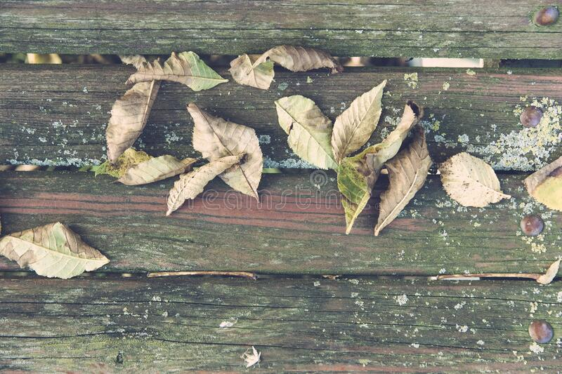 Wilted Leaves On Brown Wooden Surface Free Public Domain Cc0 Image