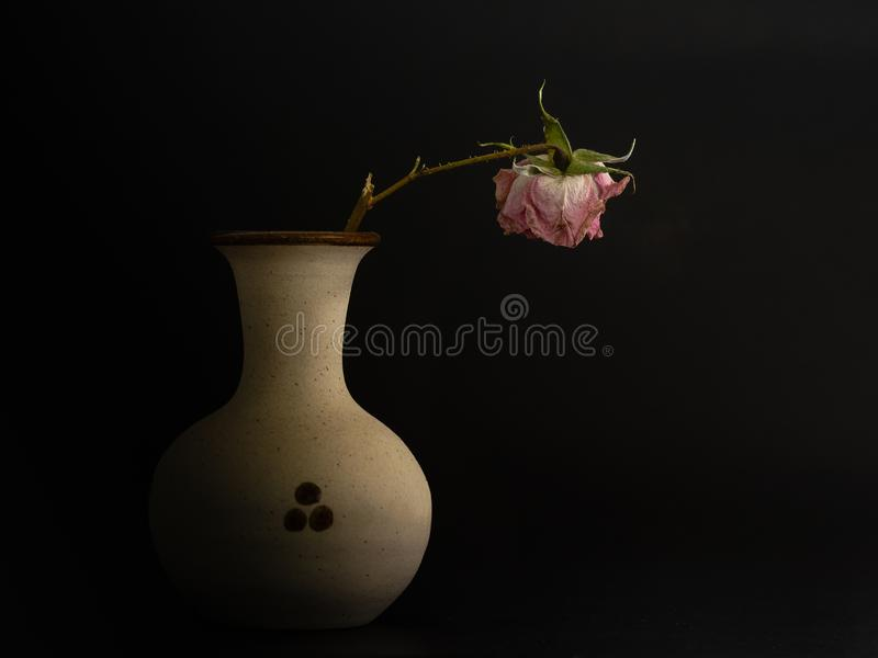 Wilted rose in a ceramic pot royalty free stock images
