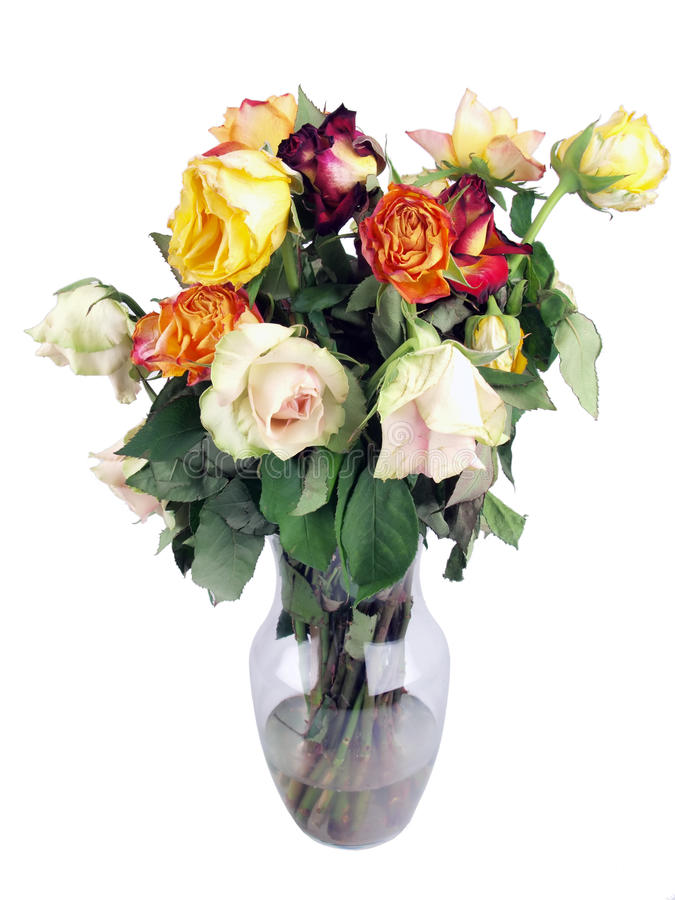 wilted roses bouquet royalty free stock photo
