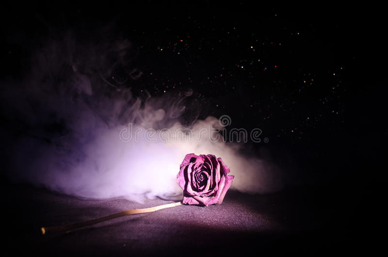 A wilting rose signifies lost love, divorce, or a bad relationship, dead rose on dark background. With smoke stock photos