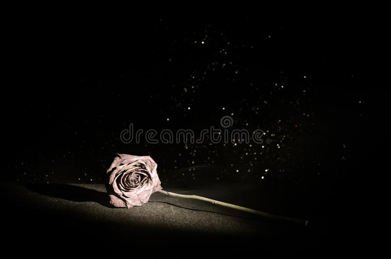 A wilting rose signifies lost love, divorce, or a bad relationship, dead rose on dark background. With smoke royalty free stock photo