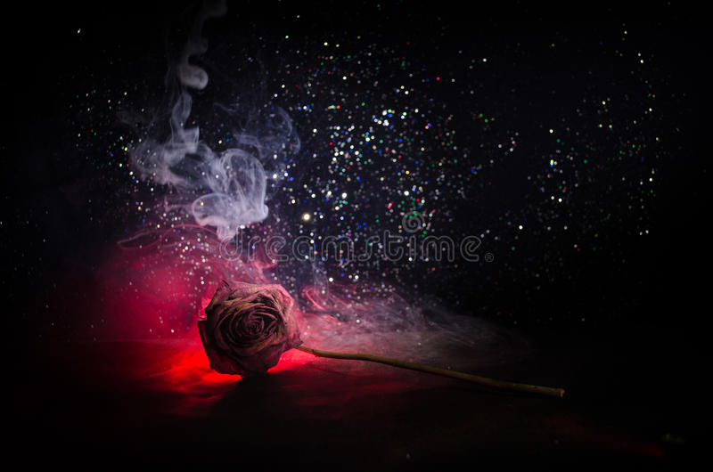 A wilting rose signifies lost love, divorce, or a bad relationship, dead rose on dark background. With smoke royalty free stock images