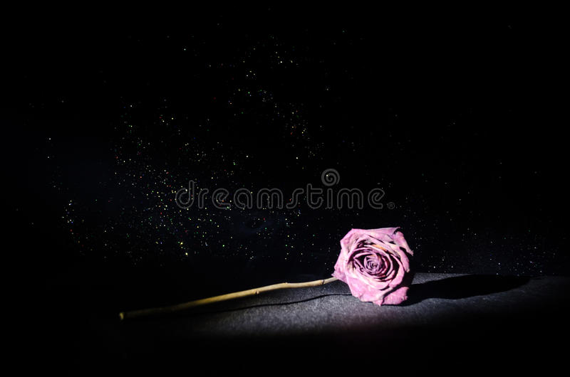 A wilting rose signifies lost love, divorce, or a bad relationship, dead rose on dark background. With smoke stock photo