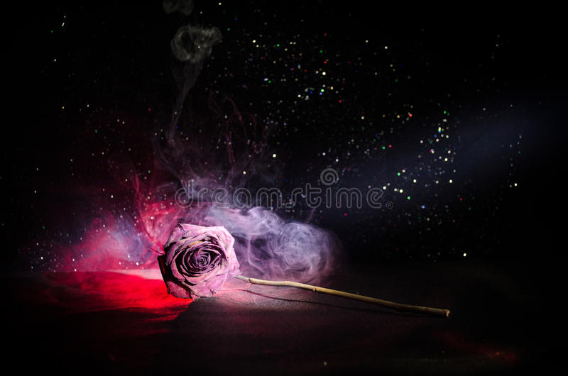 A wilting rose signifies lost love, divorce, or a bad relationship, dead rose on dark background. With smoke royalty free stock image