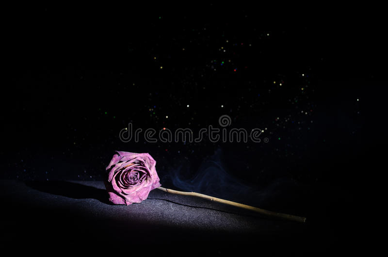 A wilting rose signifies lost love, divorce, or a bad relationship, dead rose on dark background. With smoke stock images