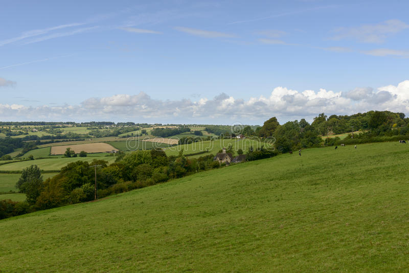 Wiltshire countryside near Corsham. Landscape with meadows in Wiltshire countryside with grazing cows stock images