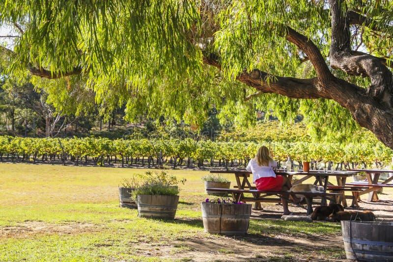 Wilyabrup, Margaret River, Australia occidental - 2011: Una señora que goza del vino en el lagar de Cullen fotografía de archivo