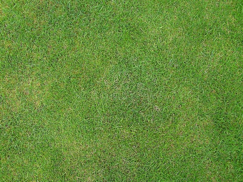 Wimbledons Gras stockfoto