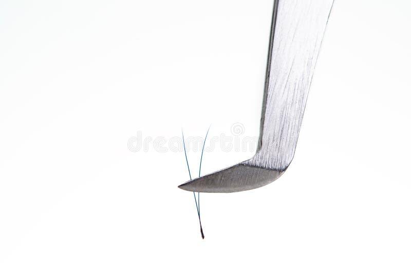Wimper-Erweiterungswerkzeuge auf weißem Hintergrund Zubehör für Wimpererweiterungen Künstliche blaue ombre Peitschen 2D stockfotos