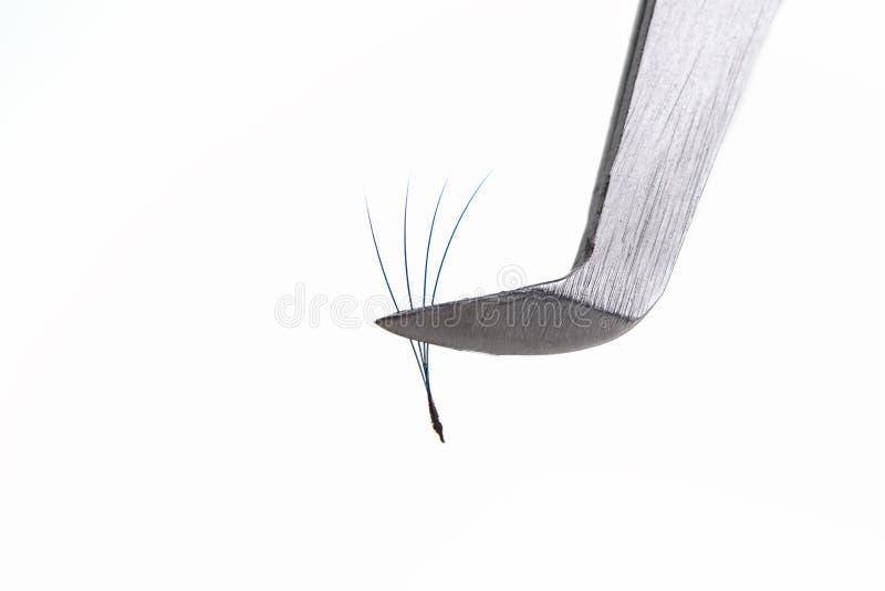 Wimper-Erweiterungswerkzeuge auf weißem Hintergrund Zubehör für Wimpererweiterungen Künstliche blaue ombre Peitschen 2D lizenzfreie stockbilder