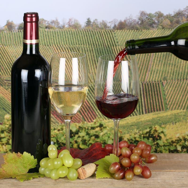 Wina dolewanie w szkło w winnicach zdjęcie royalty free