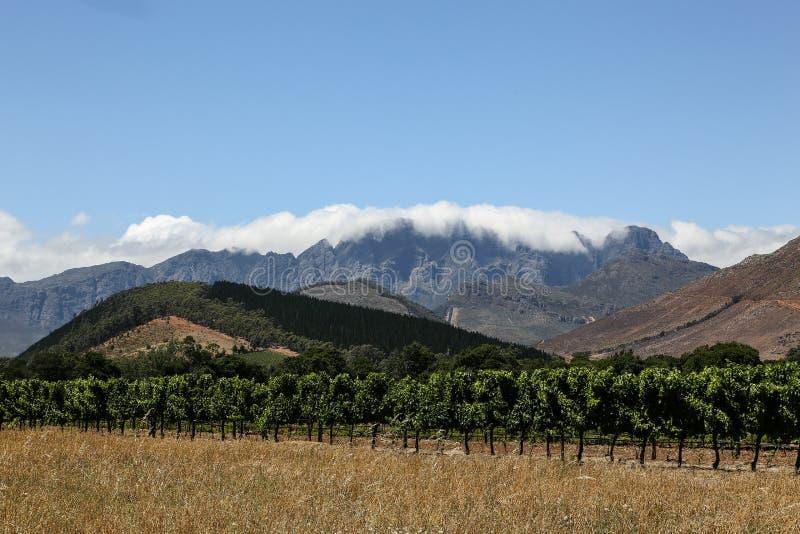 Wina gospodarstwo rolne - Kapsztad, Południowa Afryka obrazy stock