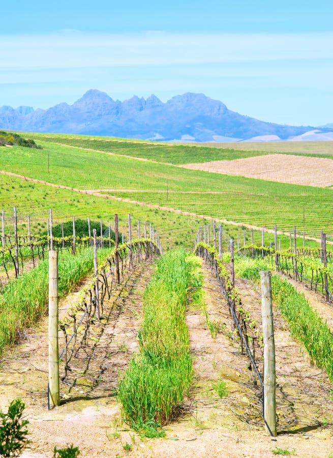Wina i banatki gospodarstwa rolne fotografia royalty free