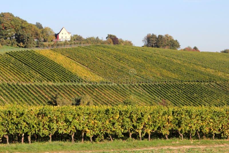 Wina rolnictwo w Hesse zdjęcia stock
